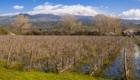 Al Lago Gurrida i tralci restano più o meno sommersi nel periodo di piena - © pietronicosia.it