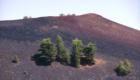 Sporadici pini colonizano le pendici dei Sartorius - © pietronicosia.it