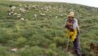 Un pastore ed il suo gregge nel periodo della transumanza - © pietronicosia.it