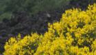 La continuità della vegetazione è spesso interrotta dalle lingue di lava solidificata - © pietronicosia.it