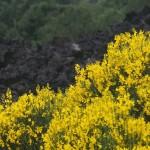 Etna, la vegetazione