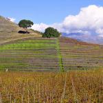 Pedara, domenica inaugurazione itinerario di Monte Troina