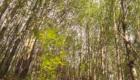 Il tratto iniziale dell'itinerario attraversa un bosco di pioppo - © pietronicosia.it