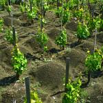 """""""Le Contrade dell'Etna"""", lunedì a Passopisciaro (Castiglione), degustazioni di vini"""