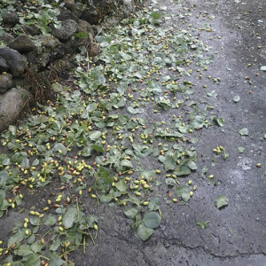 I danni provocati dalla grandinata