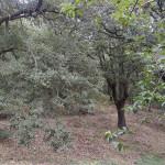 Etna, Soccorso Alpino della Guardia di Finanza recupera tre fungaioli dispersi