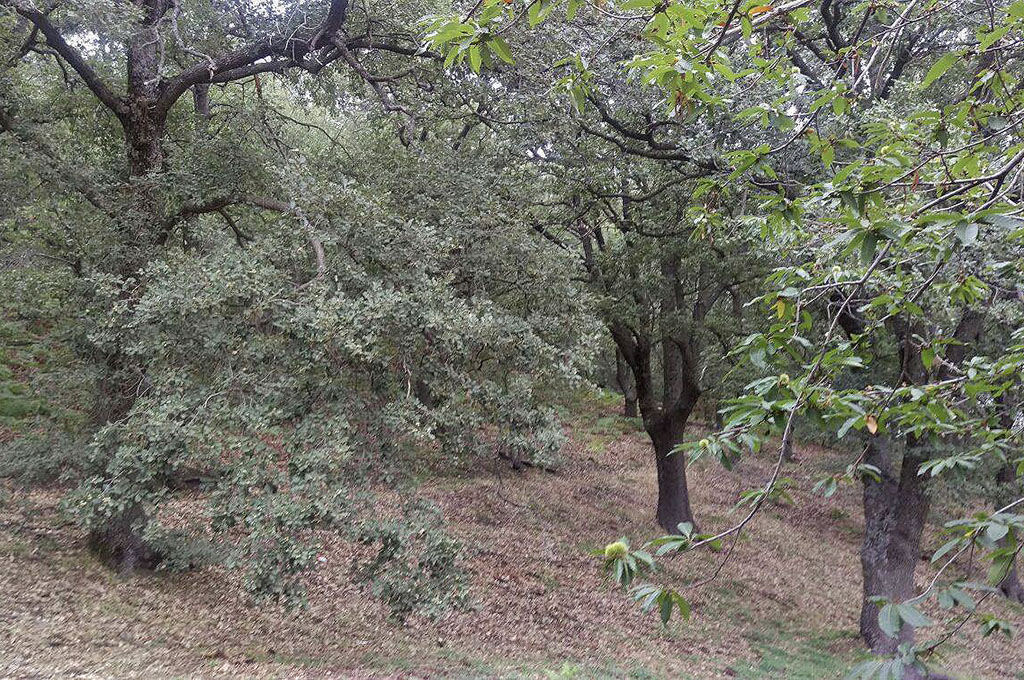 Il Bosco comunale di Monte Manfré - Immagine fornita dal Parco dell'Etna
