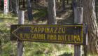 Lo Zappinazzu, il pino più antico dell'Etna - © pietronicosia.it