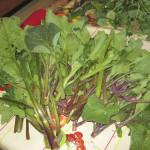 Riconoscere le verdure selvatiche dell'Etna