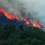 Incendi aree protette, Mazzaglia: «Attacco di chi non vuol regole»