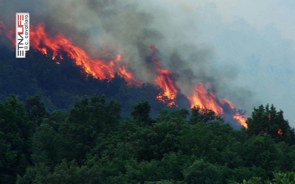 Territorio di Zafferana Etnea, nei pressi della Grotta del Gatto, almeno 30 ettari di ginestreto, lecceta, castagni secolari inghiottiti dal fuoco