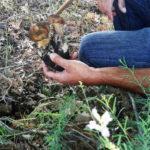Funghi e castagne: partito il saccheggio autunnale all'Etna